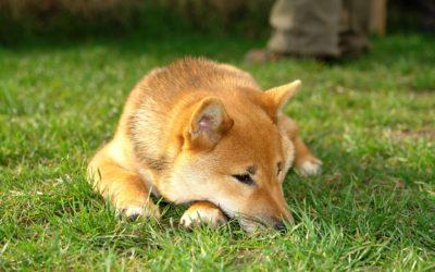 【嫁おバカな小話】飼い犬が脱走したらどうすればいい?